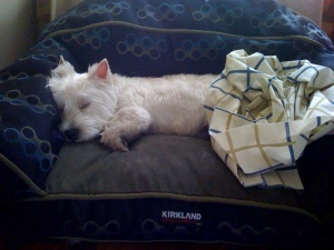 asleep on his couch