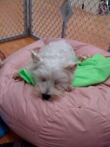 asleep on the beanbag chair