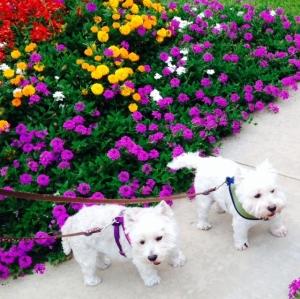 houstn flowers